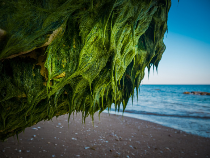 coastal drift pixabay