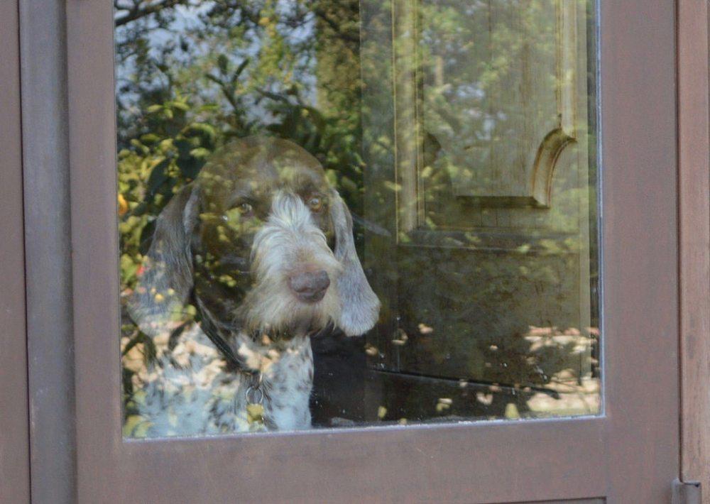 dog flickr.com (allie444)