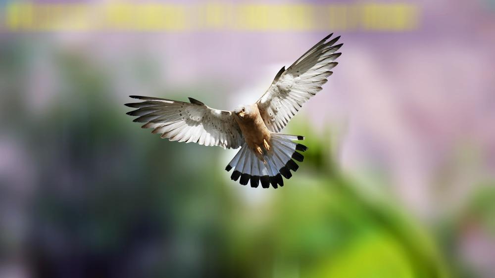 bird-3614690_1920
