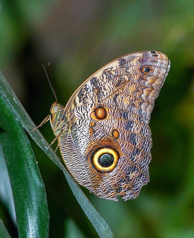 butterfly-4013003_1920