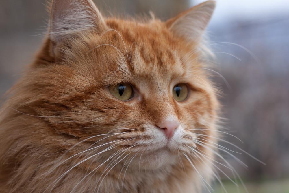 cat-4074125_1920