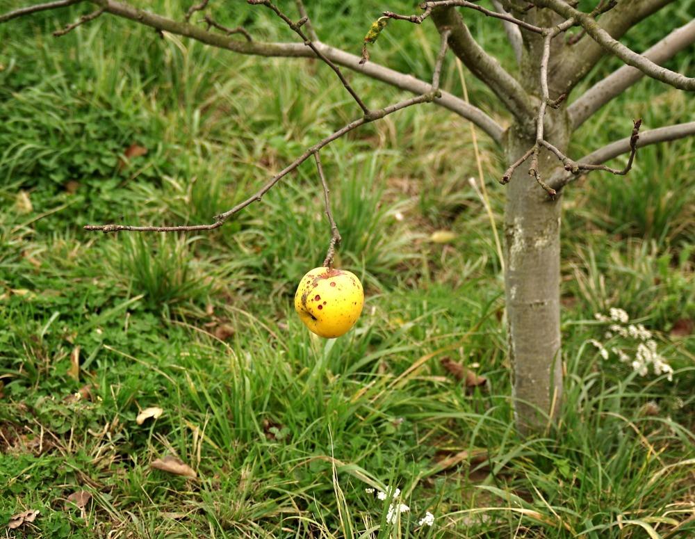 apple-3456108_1920