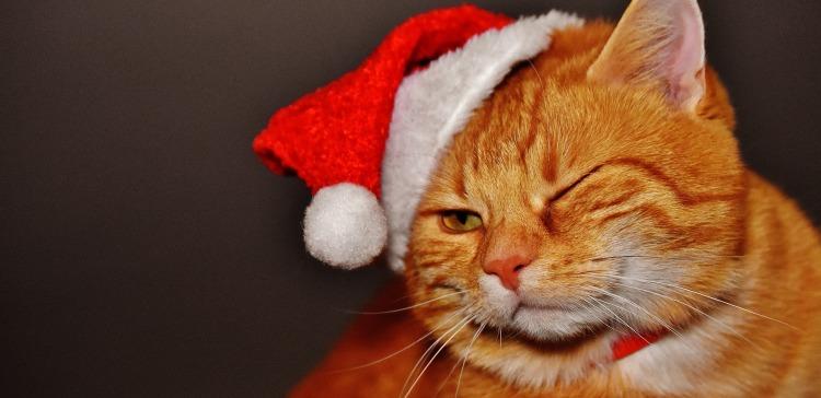 cat-1898514_1920