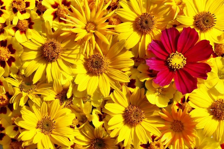 flowers-3661031_1920