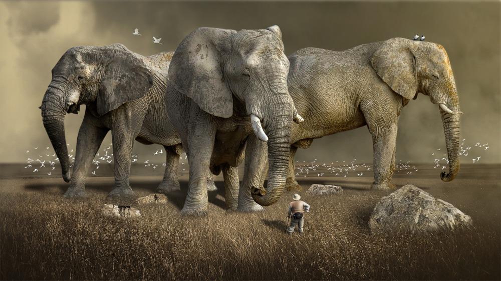 mammal-3218712_1920