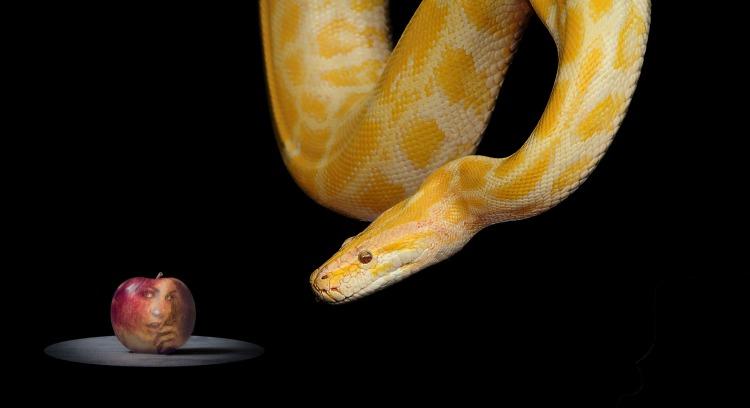 snake-1322240_1920