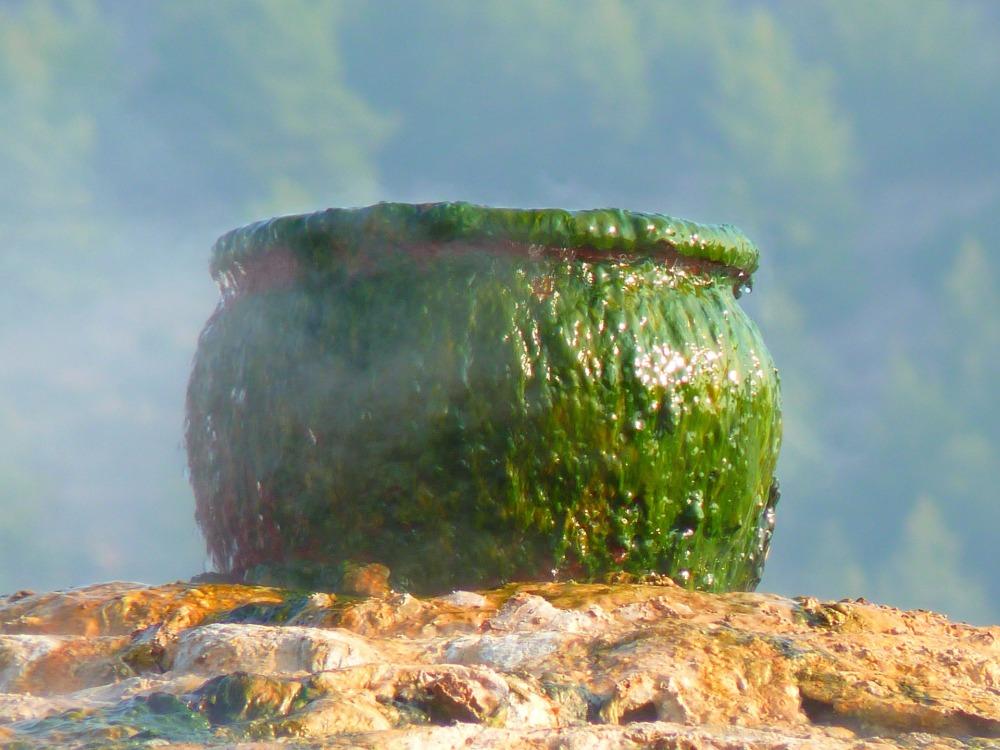 pot-15020_1920