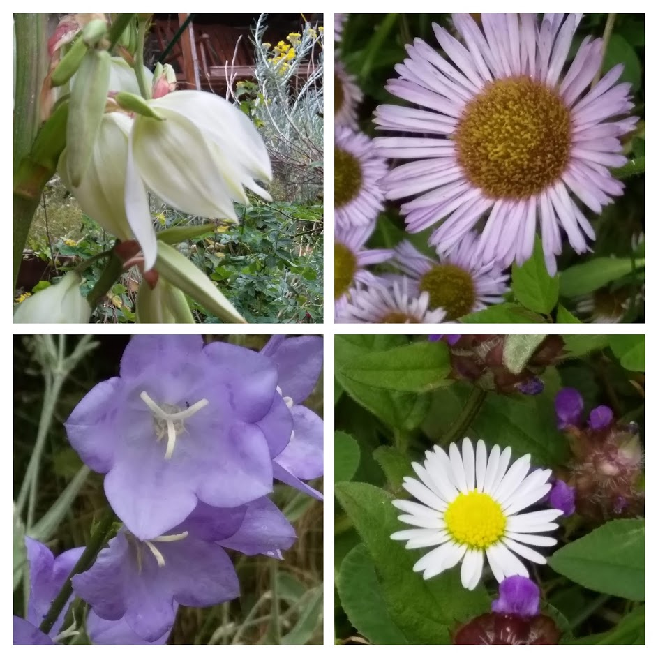 collage july 9 2019 garden1