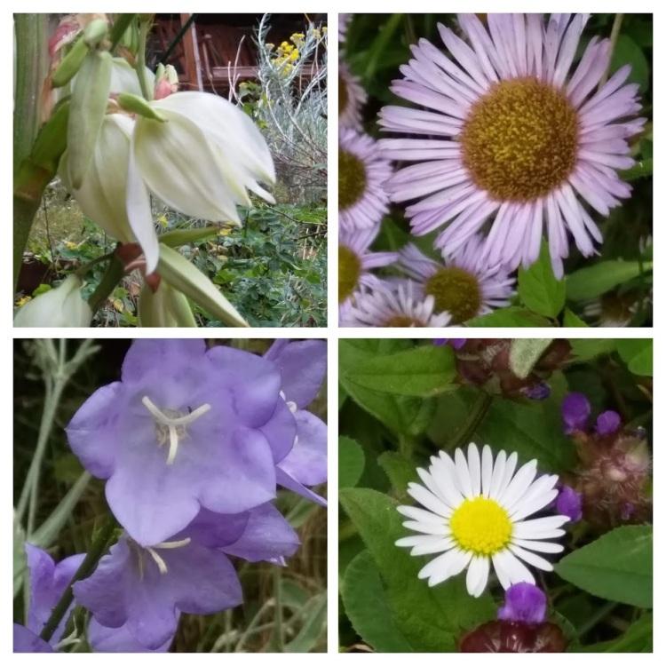 collage july 9 2019 garden1