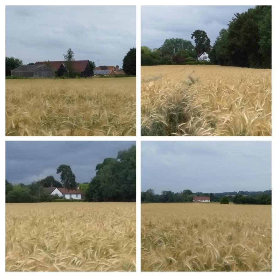 cornard c park property