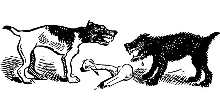 dogs-47266_1280