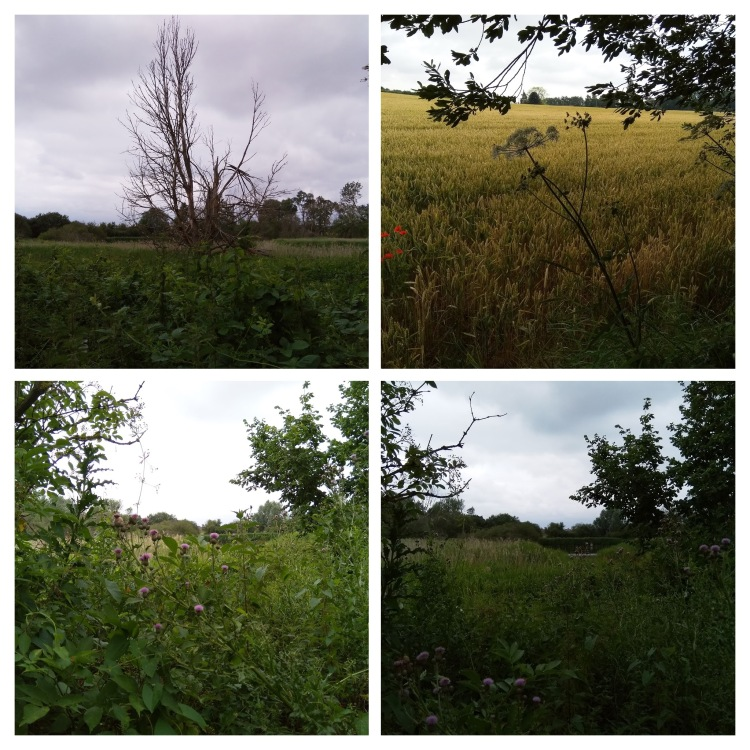 img_20190713_115406-collage