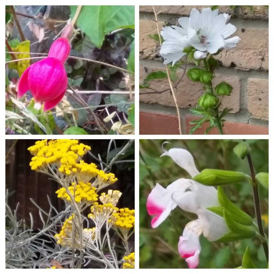 July 9 collage garden2