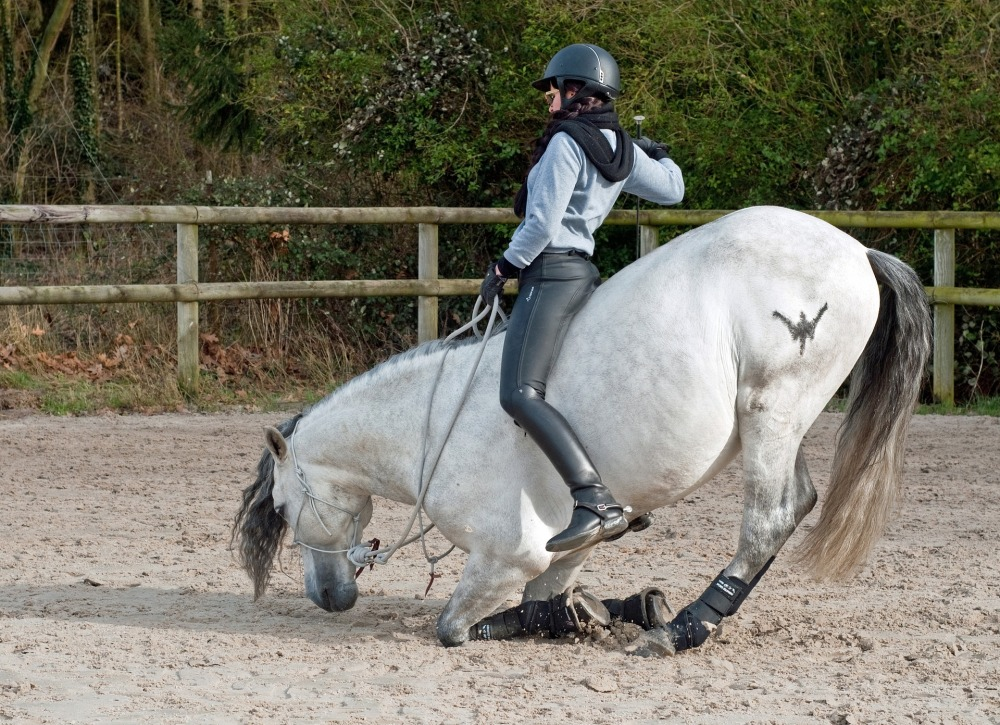 horse-2116644_1920