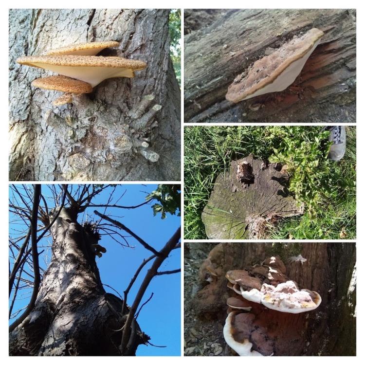 trees fungi stumps