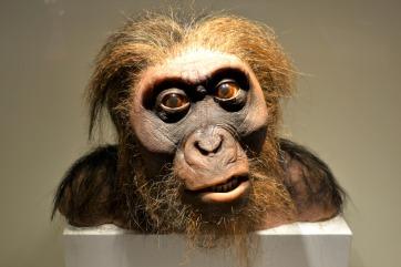 neanderthal-4624081_1920