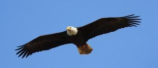 eagle-3953305_1920